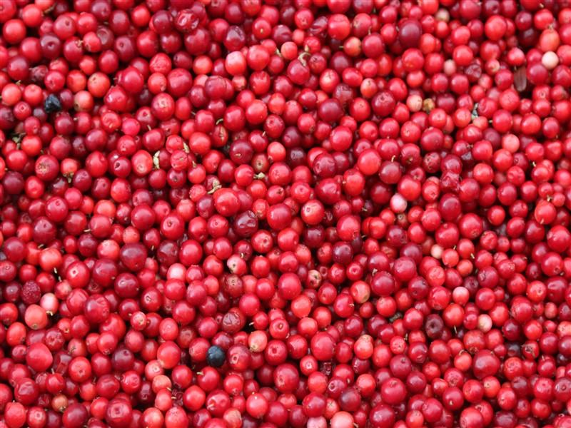 The Cranberry Craze