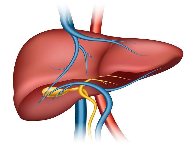 New Era in Medicine with Artificial Organs